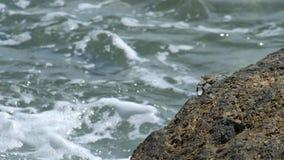 Krab na skale przy plażą zbiory
