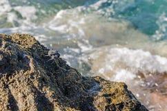Krab na skalistym dennym brzeg fotografia stock