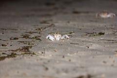 Krab na szarym piasku Zdjęcie Royalty Free