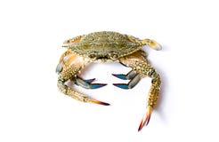 Krab odizolowywający na białym tle Zdjęcie Royalty Free