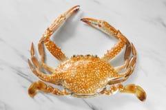Krab Odparowany krab Serrated borowinowy krab Krab odizolowywający na białych półdupkach zdjęcia royalty free
