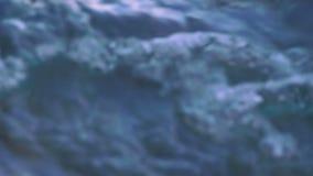 Krab op de rots bij het strand stock footage