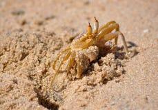 Krab op een strand Royalty-vrije Stock Fotografie