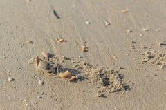 Krab op een strand Royalty-vrije Stock Afbeeldingen
