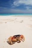 Krab op een strand Royalty-vrije Stock Afbeelding