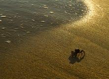Krab op een zandig strandstrand dicht bij water Royalty-vrije Stock Afbeeldingen