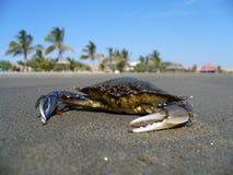 Krab op exclusief strand royalty-vrije stock afbeeldingen