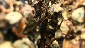 Krab op Hand stock video
