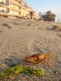 Krab op het strand stock afbeelding