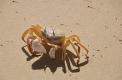Krab op het strand Stock Foto