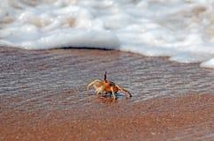Krab op het strand Royalty-vrije Stock Afbeeldingen