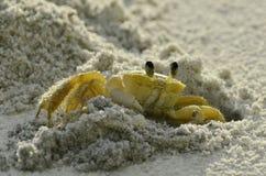 Krab op het strand Royalty-vrije Stock Foto's