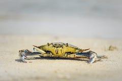 Krab op het strand Stock Foto's