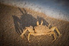 Krab op het zand Royalty-vrije Stock Foto