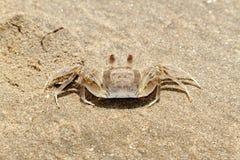 Krab op het zand Stock Foto's