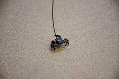 Krab op het zand in Crystal Cove State Park in Californië royalty-vrije stock fotografie