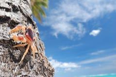 Krab op palm stock foto's