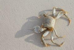 Krab op strand Stock Afbeeldingen