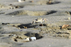 Krab op strand royalty-vrije stock fotografie