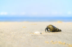 Krab op strand stock foto's