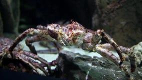 Krab overzees monster onderwater stock footage