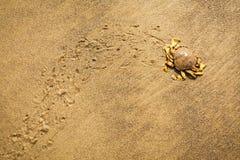 Krab poruszający na mokrym piasku Fotografia Stock