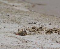 Krab robi piasek piłkom zdjęcia stock