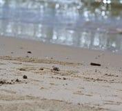 Krab robi piasek piłkom zdjęcie stock