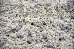 Krab robi piasek piłkom na plaży Ducha krab Piaska krab zdjęcie royalty free