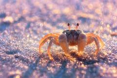krab trochę Obrazy Royalty Free