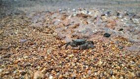 krab trochę Zdjęcia Stock