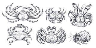 Krab vectorreeks Hand getrokken illustraties Royalty-vrije Stock Foto's