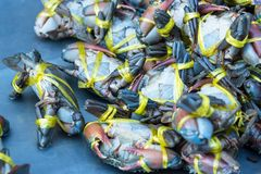 Krab in verse markt bij veerboot van Angsila, Choburi, Thailand Overzees Royalty-vrije Stock Foto