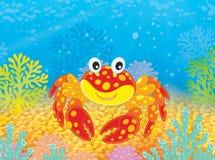 Krab z aktyny Fotografia Stock