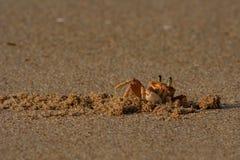 kraba Zdjęcia Royalty Free