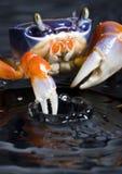 kraba Obraz Royalty Free