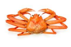 kraba czerwieni śnieg Obrazy Royalty Free