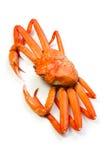 kraba czerwieni śnieg Obraz Stock