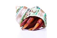 kraba eremita obraz stock