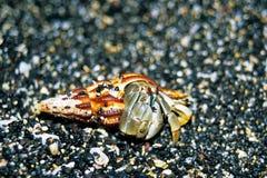 kraba eremita zdjęcie stock