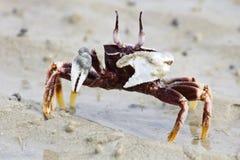 kraba morze Fotografia Royalty Free