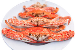 kraba naczynie Zdjęcia Stock