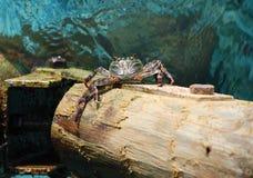 kraba obwieszenie Obrazy Royalty Free