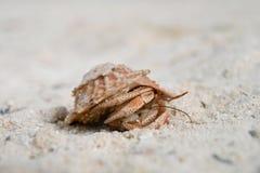 kraba odprowadzenie Fotografia Stock