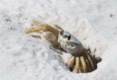 kraba piasek Zdjęcie Stock