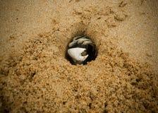 kraba piasek Obrazy Stock