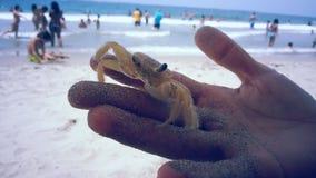 Kraba przyjaciel Zdjęcia Stock