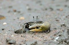kraba sward Zdjęcia Royalty Free
