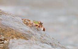 Kraba wspinaczkowy up skała Fotografia Stock
