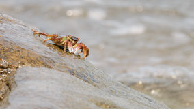 Kraba wspinaczkowy up skała Zdjęcia Royalty Free